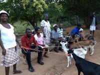 Goats of Grace