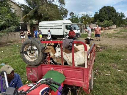 Goats ready to go to Laca'jue