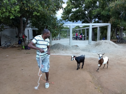 Hand picked goats to be given