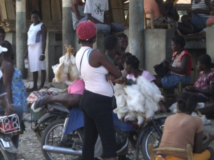 104 chickens on motorcyle